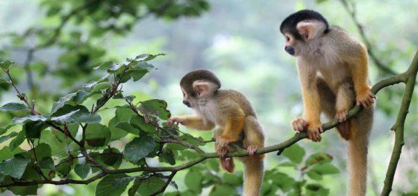 Nằm mơ thấy con khỉ là điềm gì, đánh đề con gì chắc ăn nhất?