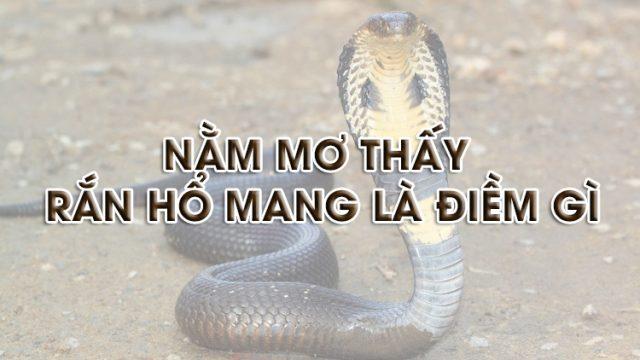 Nằm mơ thấy rắn hổ mang là điềm gì, đánh con gì chắc ăn?