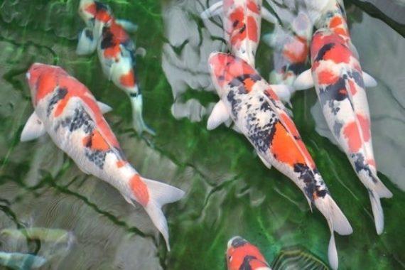 Nằm mơ thấy cá đánh là điềm lành hay dữ, đánh con gì chắc ăn?