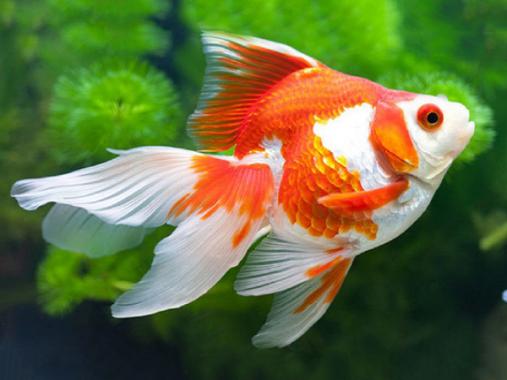 Chiêm bao thấy cá báo mộng gì? giải mã chi tiết giấc mơ thấy cá