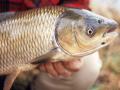 Chiêm bao thấy đánh bắt cá điềm gì và nên đánh con số đề nào
