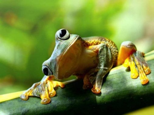 Ngủ mơ thấy con ếch là điềm báo tốt hãy xấu ?