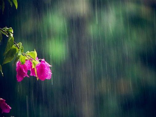 Nằm mơ thấy mưa gió có ý nghĩa gì? Nên đánh số gì để may mắn