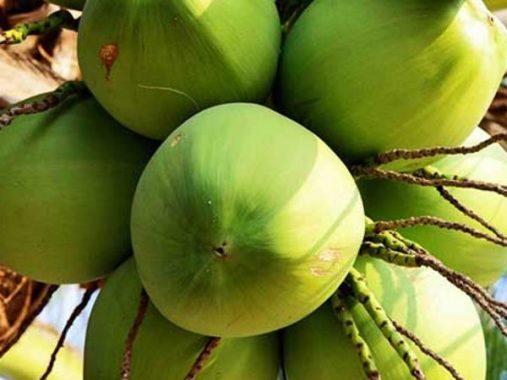Mơ thấy quả dừa là điềm báo gì, đánh con nào may mắn?