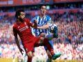 Nhận định bóng đá Liverpool vs Brighton, 19h30 ngày 28/11